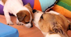 Hundekranken-Versicherung
